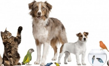 Para perros y gatos   Bromatología y Zoonosis comienza con los operativos de castración y vacunación