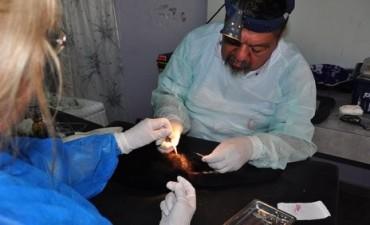 Bromatología y Zoonosis comienza con los operativos de castración y vacunación