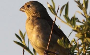 Se realizará una Jornada de Asesoramiento Técnico sobre Observación de Aves