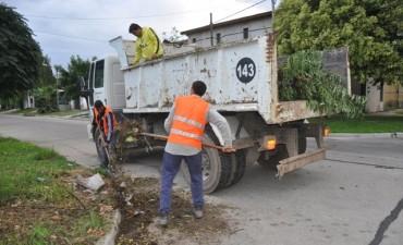 Tras el reclamo de vecinos al CEMAV, retiran montículos de ramas y residuos