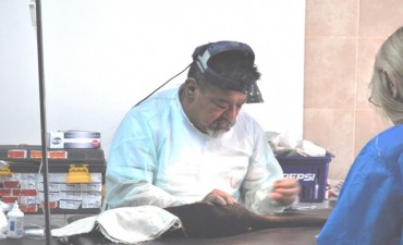 Los operativos de castración y vacunación llegan al barrio Albizola