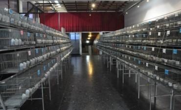 En el salón Ronald Nash Hoy se inaugura la Exposición de Canaricultores Roller Campana