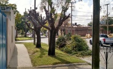 Solicitan conservar el arbolado urbano en la ciudad