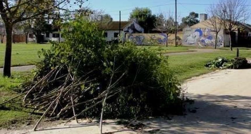 El Municipio recuerda que está prohibida la poda de árboles sin autorización