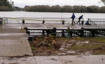 La caída de un árbol provocó daños en la zona del Muelle de Costanera