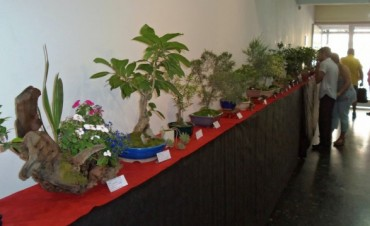 Inscripción para el Taller de Bonsai dictado por la Prof. Graciela Jacob