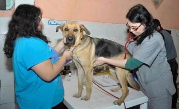 Se castraron 100 animales gratis a través del programa Protenencia