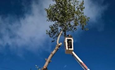 Finalizó la temporada de poda de invierno: el Municipio intervino en el mantenimiento de 2.400 árboles