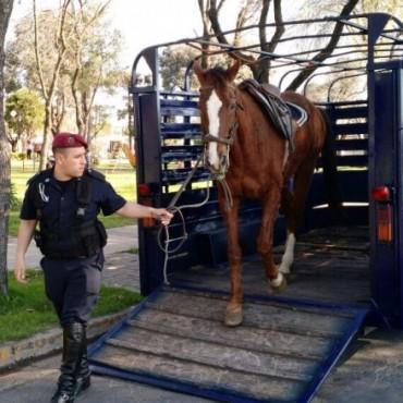 Recuperan un móvil policial y un tráiler para reforzar el trabajo de la Caballería