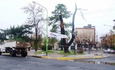 El Municipio trabajó en la limpieza y desobstrucción  de sumideros y bocas de tormentas