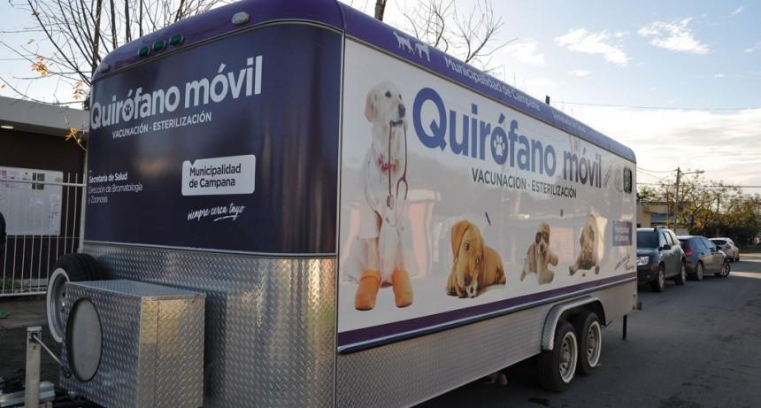 San Jacinto: el quirófano móvil visitará el barrio para castrar mascotas