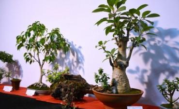 El Taller Municipal de Bonsai realizó su Muestra Anual
