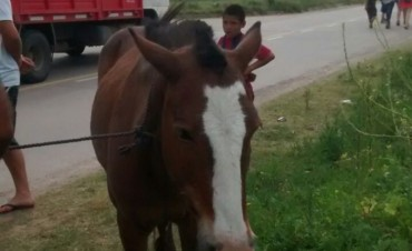 A pedido del Intendente, el Comando de Patrullas Rural realizó un operativo para retirar animales sueltos