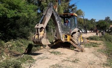 El Municipio intervino ante la caída de una rama de eucalipto en Otamendi