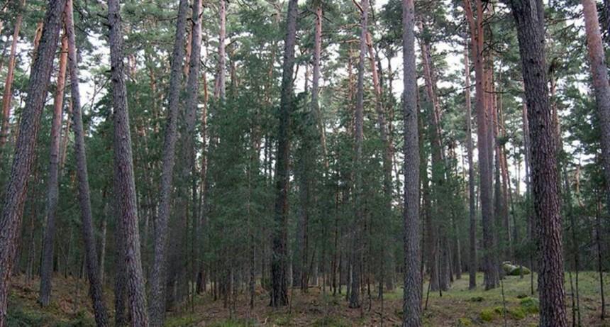 """Ya está en marcha el programa """"Seguro Verde"""" para promover la forestación de bosques nativos"""