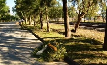 A través de Obras Públicas, el Municipio realizó tareas de limpieza en la calle Irigoyen