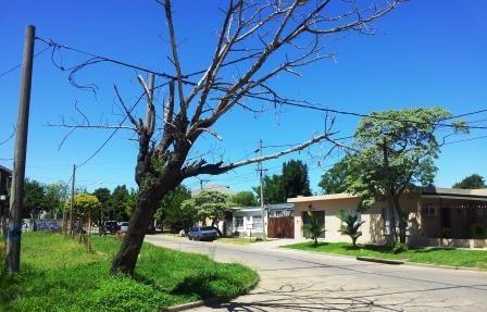 Vecinos sin respuestas ante un árbol a punto de caerse