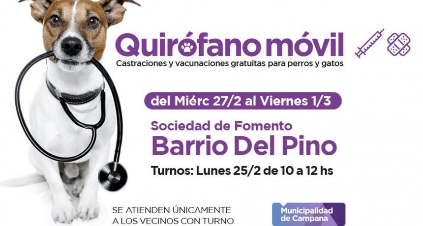 Quirófano Móvil: los vecinos del barrio Del Pino podrán castrar a sus mascotas