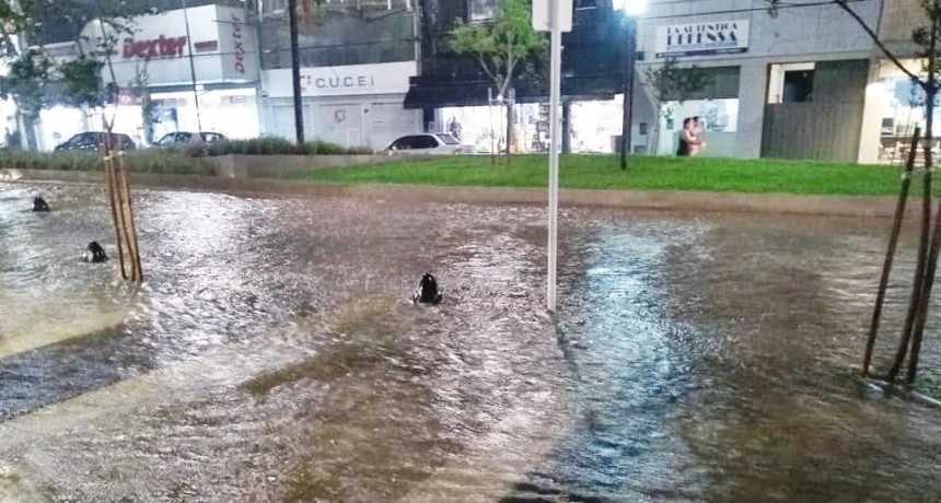 """""""El Municipio debe reconocer que la obra  de la Av. Rocca es un verdadero fracaso"""""""