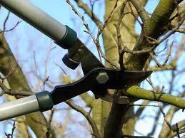 El Municipio recomendó a los vecinos respetar la disposición de los residuos y poda de árboles
