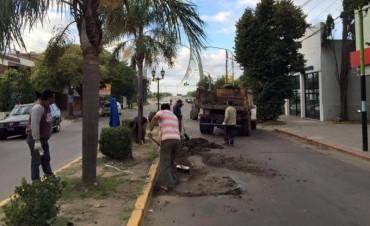 El Municipio comenzó con la reparación de la avenida Varela