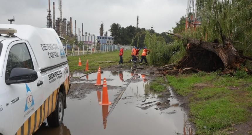 Defensa Civil actuó ante la caída de árboles y postes de luz por las fuertes tormentas
