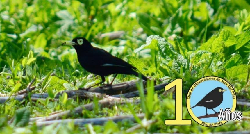 10 años del Club de Observadores de Aves Pico de Plata