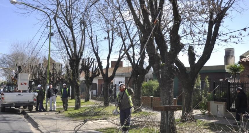 El Municipio aclara que la poda de árboles debe realizarse con autorización previa