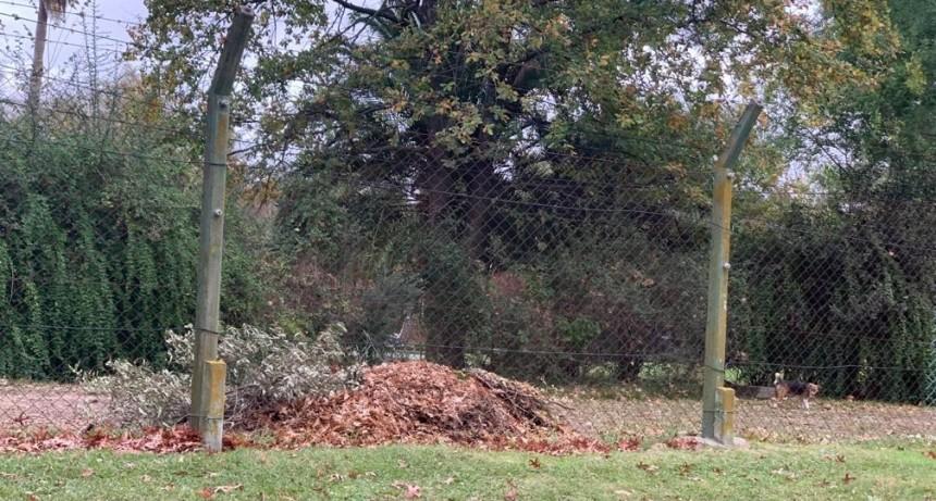 Solicitan a los vecinos abstenerse de podar árboles sin permiso