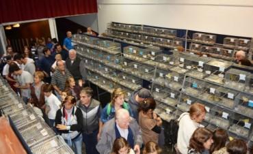 La Asociación de Canaricultores Roller Campana realizó su 27º Exposición Anual