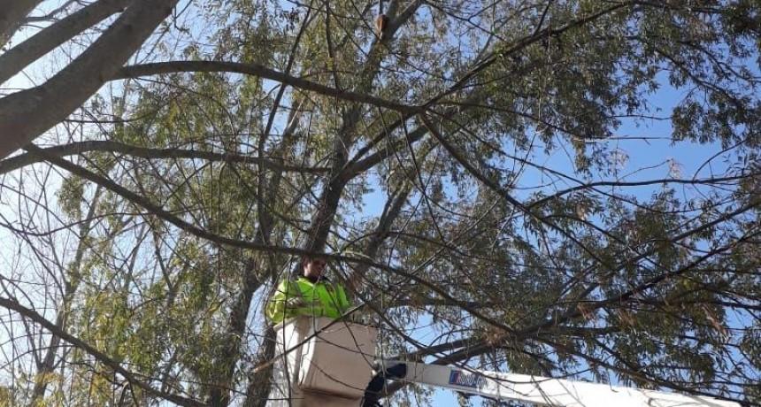 Defensa Civil rescató un gatito atrapado en un árbol
