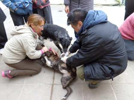 El Municipio llevó a cabo el Operativo de Desparasitación y Vacunación de Mascotas en Centros de Evacuados