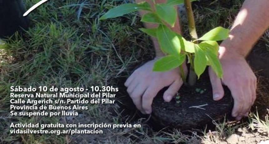 Veni a plantar nativas con vida silvestre