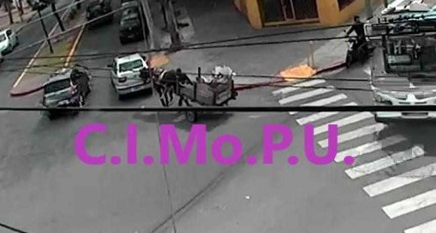 Tracción a sangre: el Municipio secuestró un caballo que era maltratado en la vía pública