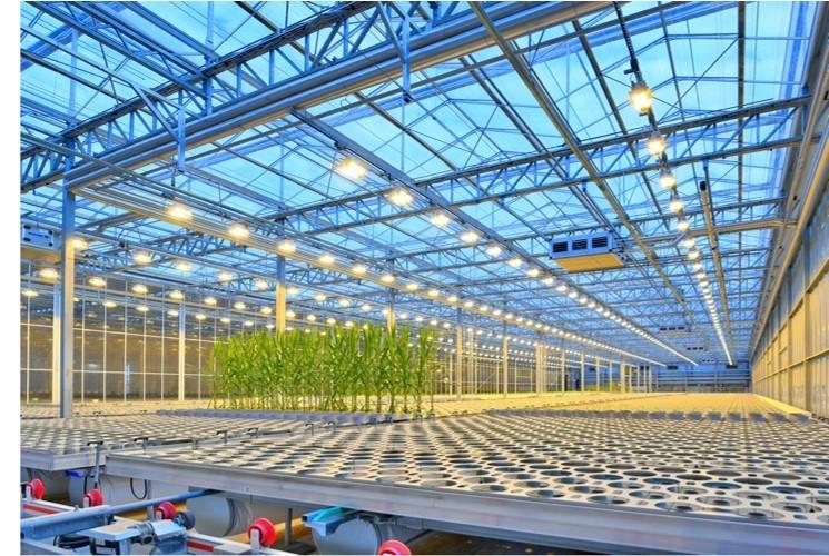 Bio Revolución en semillas: el camino de Bayer para alcanzar un sistema alimentario sostenible