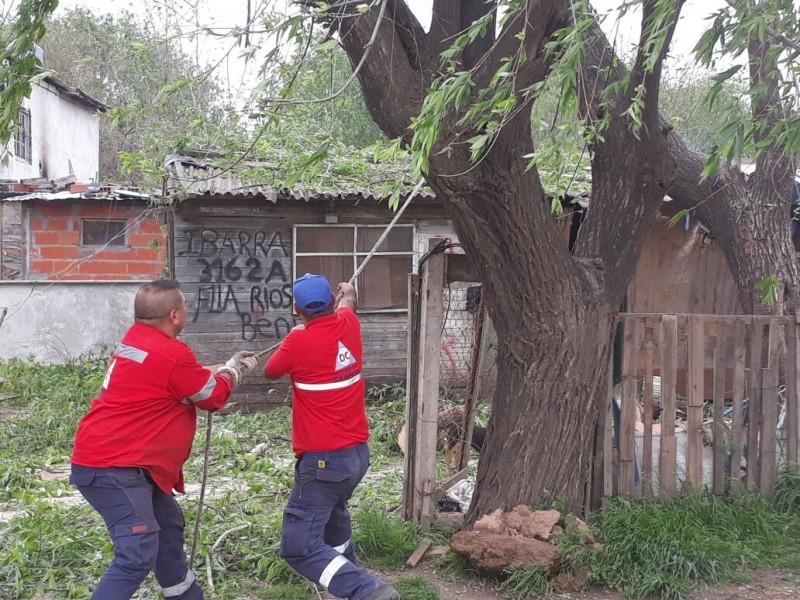 Ante una inminente caída sobre una vivienda, se podó un árbol de gran tamaño