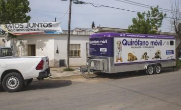 Quirófano móvil: el Municipio informa el cronograma de castración para los barrios