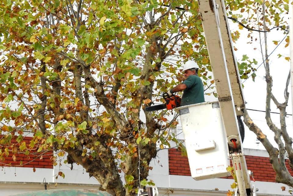 Desde el Municipio recuerdan la vigencia de la veda de poda