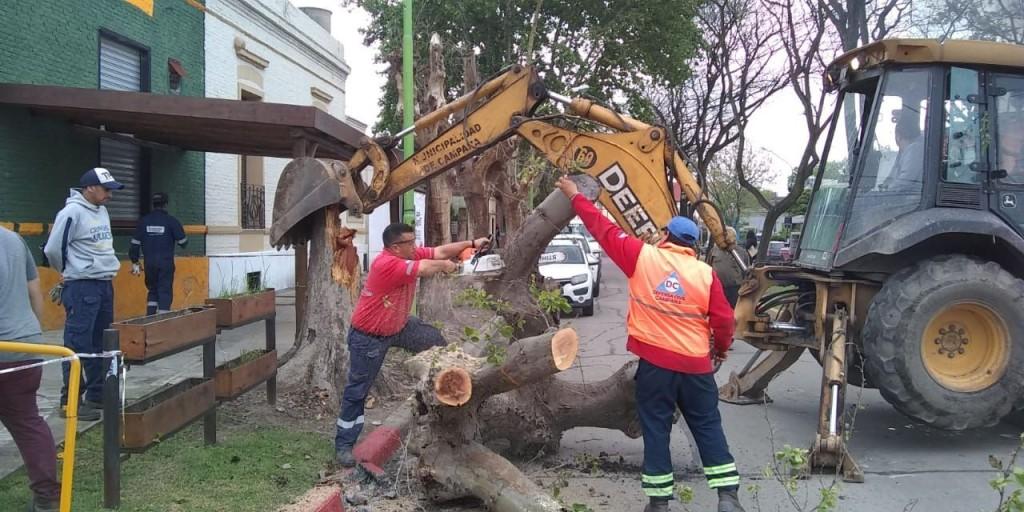Sarmiento y Becerra: retiran un frondoso árbol a punto de caer