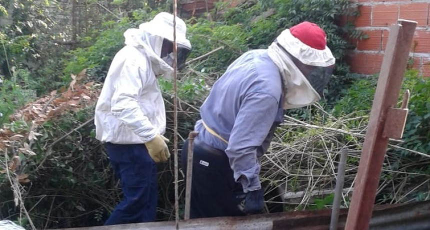 Personal municipal recupera panales de abejas ubicados en un domicilio