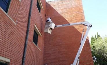 El Municipio colaboró para extraer un panal de abejas de una escuela