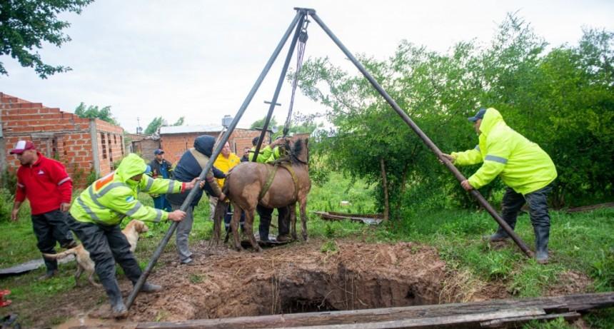 Rescatan a un caballo que se cayó un pozo